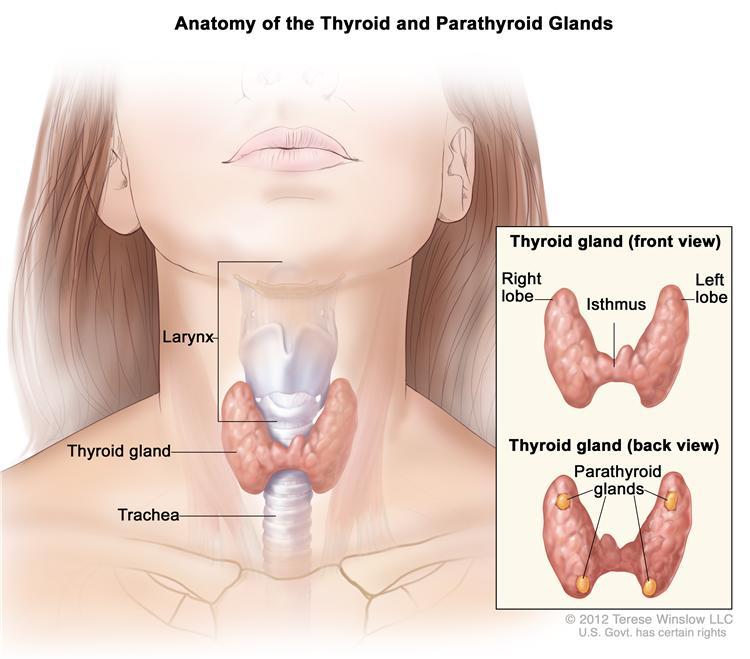 Thyroid & Parathyroid 2015