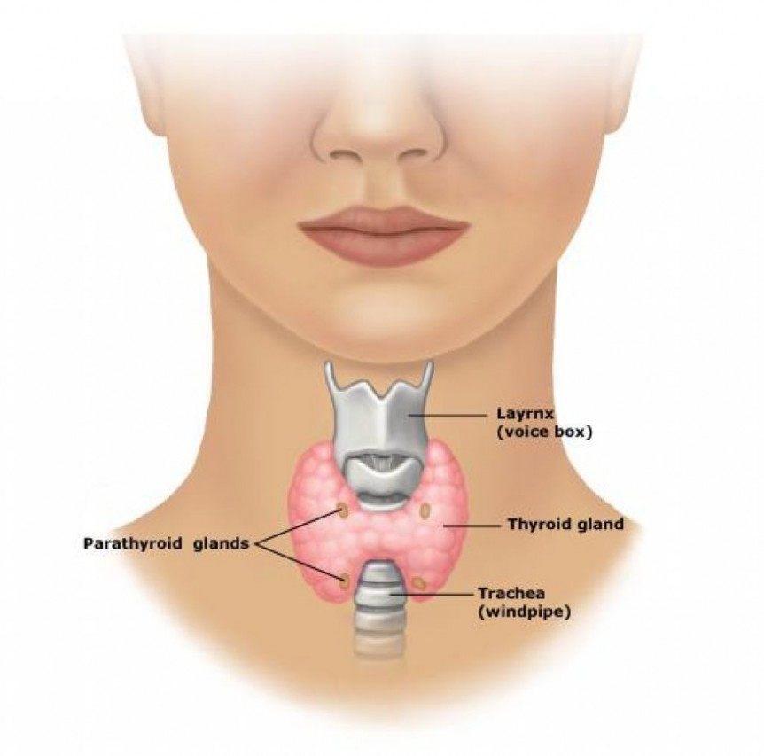 Thyroid Disorders | Maitland Chiropractor - The Bolick ...